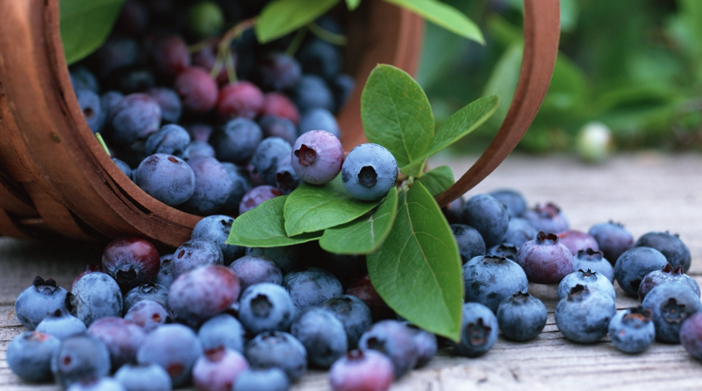 grow-your-own-antioxidants-blueberries-1024x571