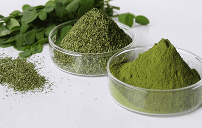 Moringa – This Herb Kills Cancer And Stops Diabetes