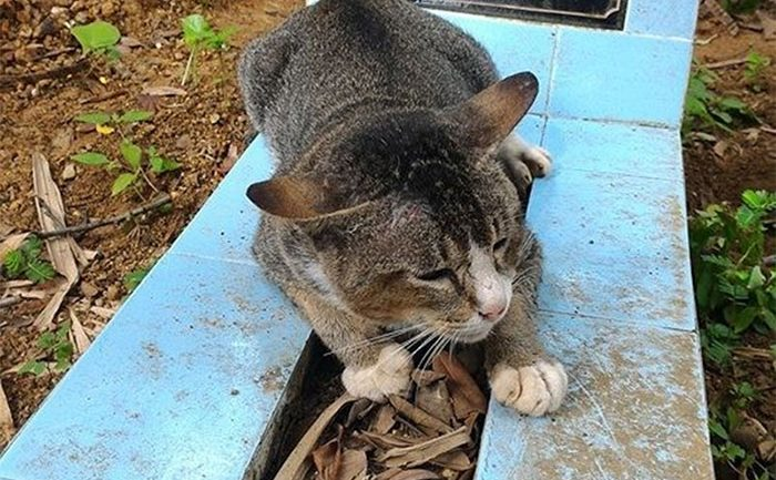 Heartbroken Cat Has Spent 1 Year By Her Dead Owner's Grave
