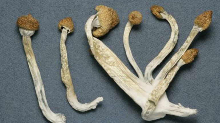 Magic Mushrooms: Psychedelic Drugs Ease Anxiety For People With Life Threatening Cancer