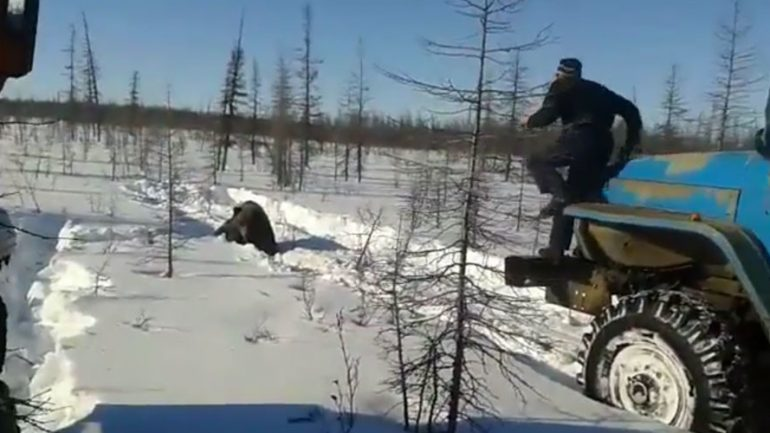 Bear Tortured & Killed By Workers With Trucks in Siberia