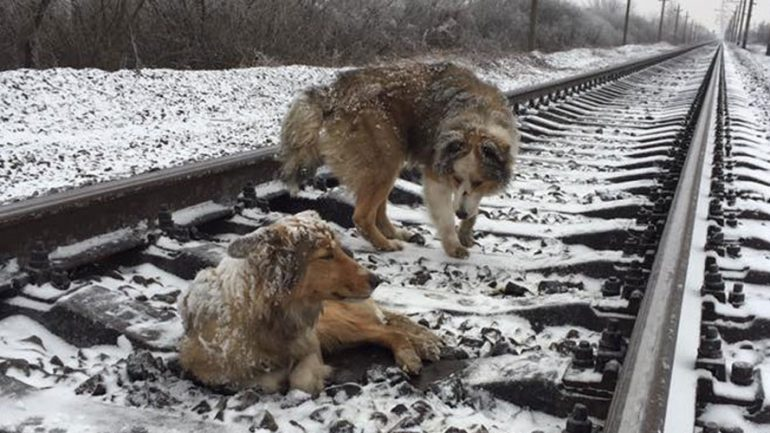 Dog Spends 2 Days on Frozen Rail Tracks Trying To Save Injured Pal