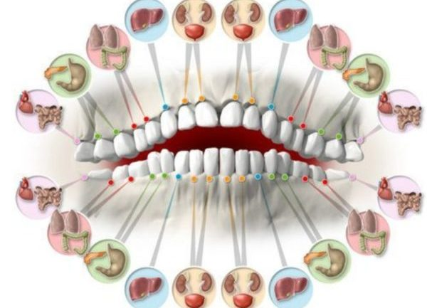 Each Tooth Is Associated With Organ In The Body…..Pain In Each Tooth Predict Problems In Certain Organ