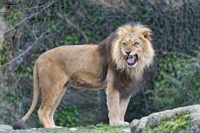 12-Year-Old Is Abducted And Beaten By Men…..Then 3 Lions Save Her Life