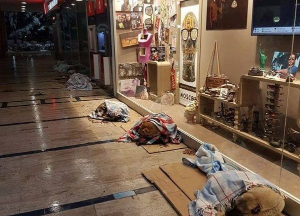 This Mall in Turkey Let Homeless Dogs Sleep Inside to Escape the Cold
