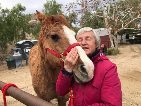 This Sanctuary Saw Their Senior Horses Struggling With Arthritis, So They Did Something Brilliant