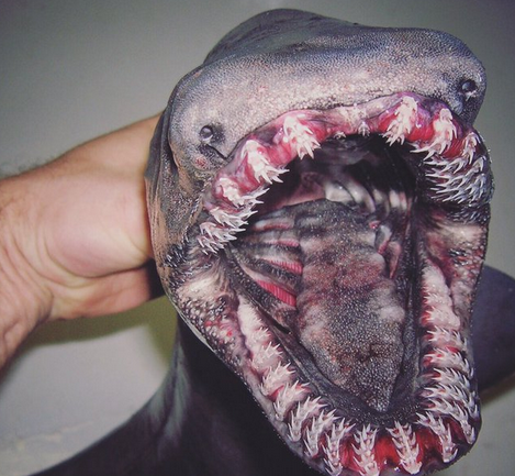 This Russian Fisherman's Deep Sea Discoveries Are The Stuff of Nightmares