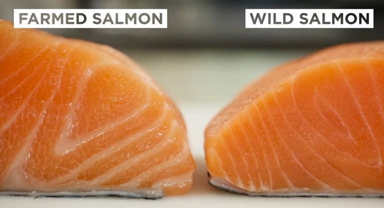 Salmon Scam: Is Your Wild Salmon Really Wild?