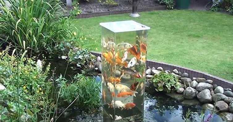 He Flips A Glass Aquarium Upside-Down, Now Keep Your Eye On The Fish…Incredible