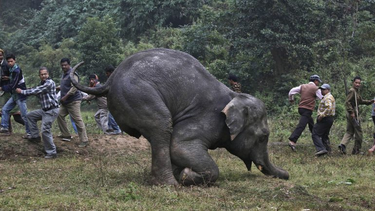 Elephant Poachers Receive Nasty Surprise When Their Would Be Victims Do THIS