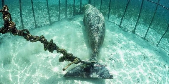 Divers Are Heartbroken When They Discover Animals Being Kept In Horrible Underwater Cages
