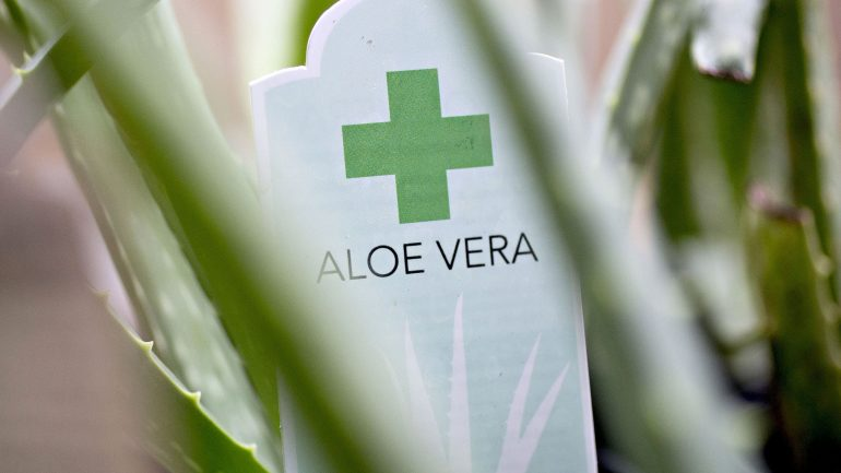 Scam Alert: There May Be No Aloe In The Aloe Vera Sold At 23,000 Wal-Mart, CVS, Target Stores
