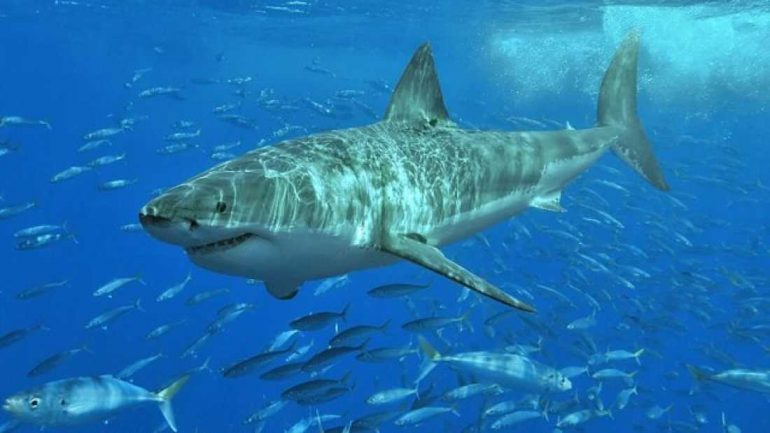 Massive Sea Creature Attacks, Kills And Eats A 3 Meter Long Great White Shark