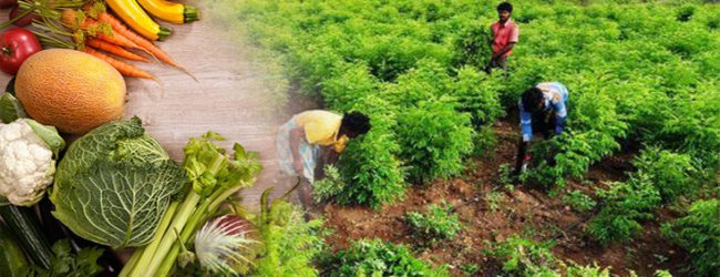 Indian State Will Pay Farmers To Go 100% Organic and GMO Free