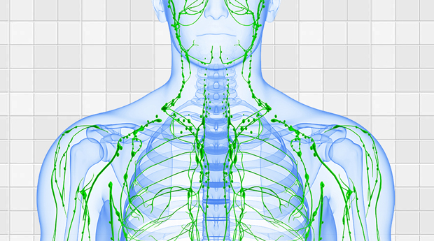 Four Ways to Keep Your Lymphatic System Healthy