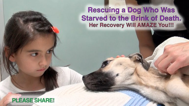 Rescuing a Dog Who Was Starved To The Brink of Death