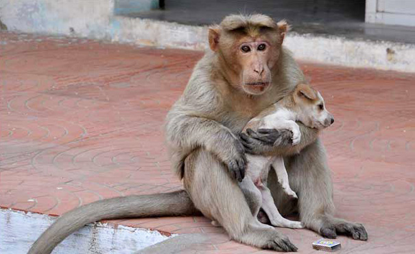 Monkey Finds Abandoned Puppy, Adopts It As Her Own and Protects It From Other Stray Dogs