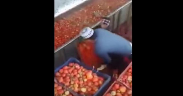 Heinz Wants Disgusting Video From Inside Factory Deleted. See It Before It's Taken Down