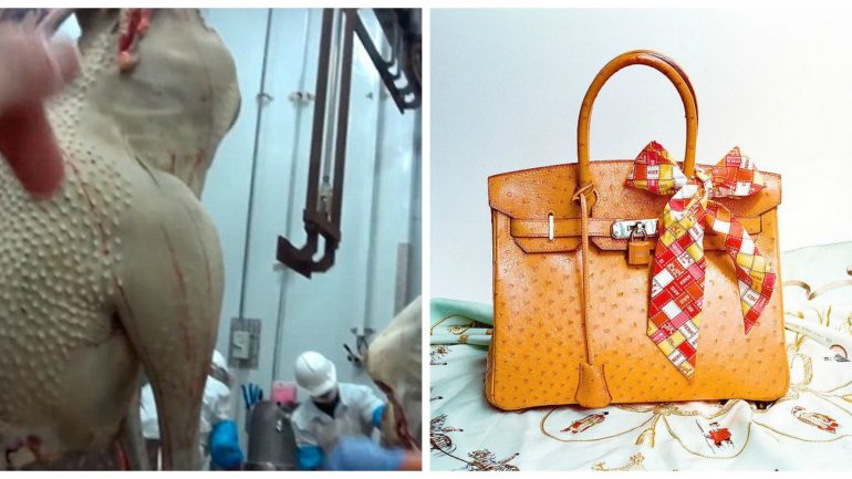 Baby Ostriches Slaughtered For Lois Vuitton Luxury Bags