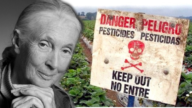 SOCIETY & CULTURE Jane Goodall: How Can We Believe It Is a Good Idea To Grow Our Food With Poisons?