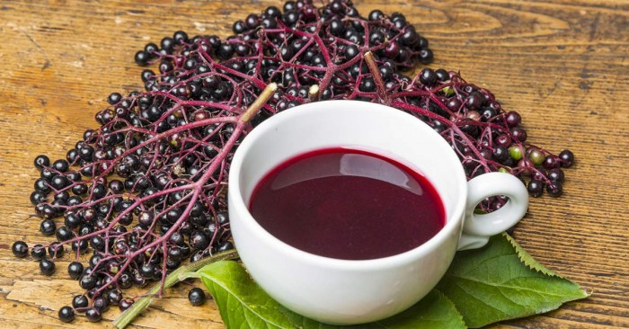 What Happens To FAT, Inflammation and Immunity When You Eat 1 Tbsp of Elderberry Syrup Daily