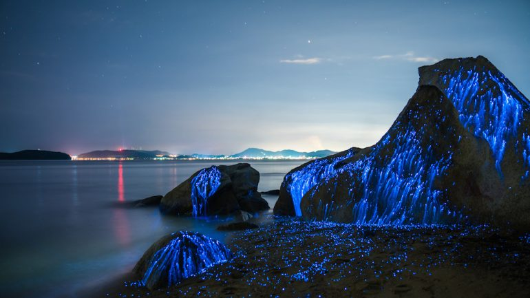 Ghostly Photographs of Bioluminescent Shrimp in Japan