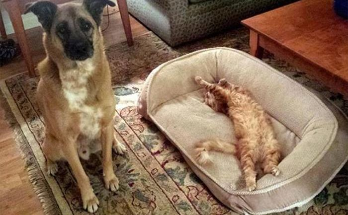 Dogs' Reaction To Finding Cats Sleeping In Their Beds Will Leave You Speechless