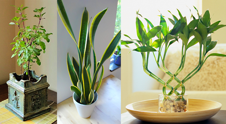 7 Plants That Attract Positive Energy In Your Home and Office