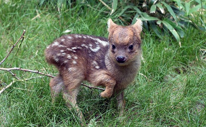 Rare Animal Babies You've Probably Never Seen Before