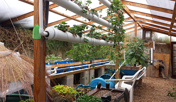 Grow Food Year Round in a $300 Underground Greenhouse