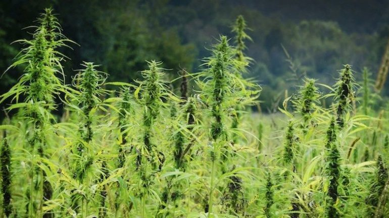 15 Mind Blowing Ways Hemp Can Save The World