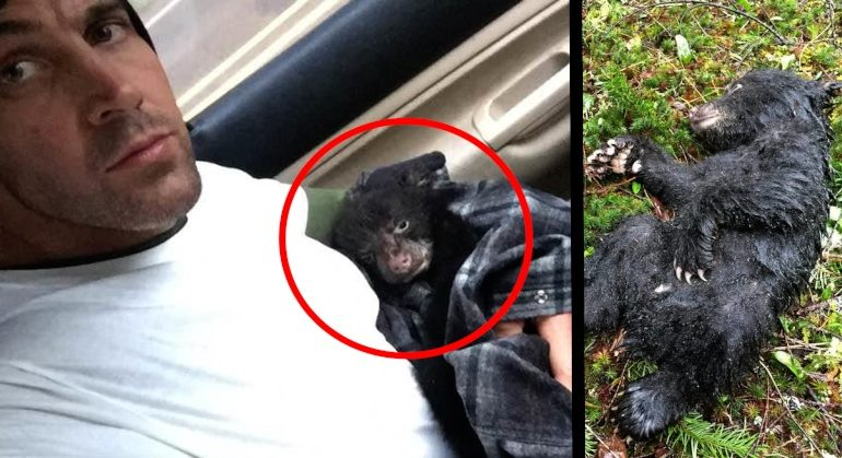 Guy Saves Baby Bear, Could Face Criminal Charges For This Ridiculous Reason
