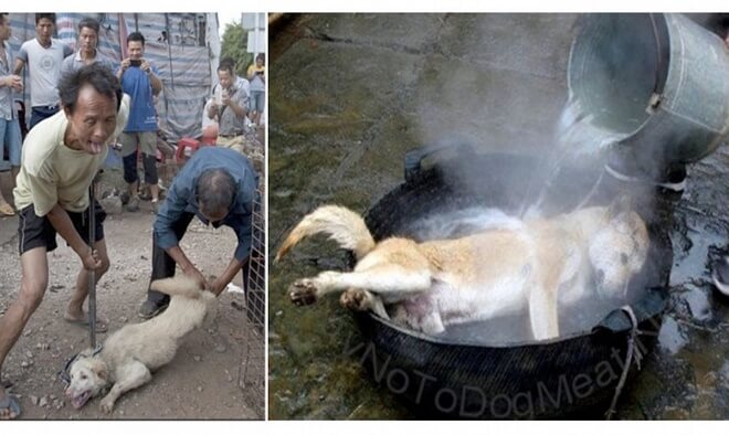 Take Action Now! Chinese Dog Eating Festival Starts in Just 3 Months