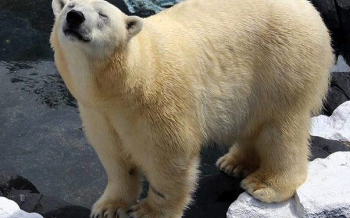 "Polar Bear Dies Of A ""Broken Heart"" After SeaWorld Shipped Off Best Friend Of 20 Years"