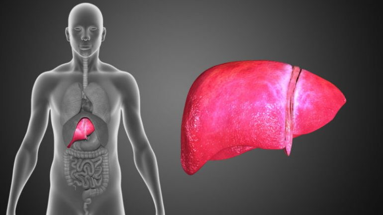 10 Foods & Supplements That Reverse Liver Disease