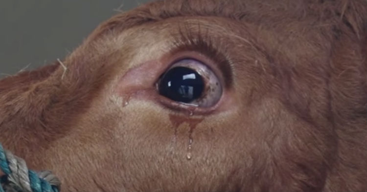 Photo Of Animal Crying Is Going Viral – Here's The Happy Ending Story Behind It