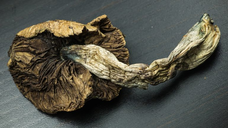 A Single Dose of Psilocybin (Magic Mushrooms) Relieves Depression in 80% of Cancer Patients
