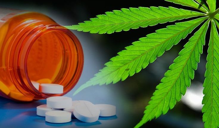Study Finds That States With Medical Marijuana Laws Have Lower Rates of Opioid Related Deaths