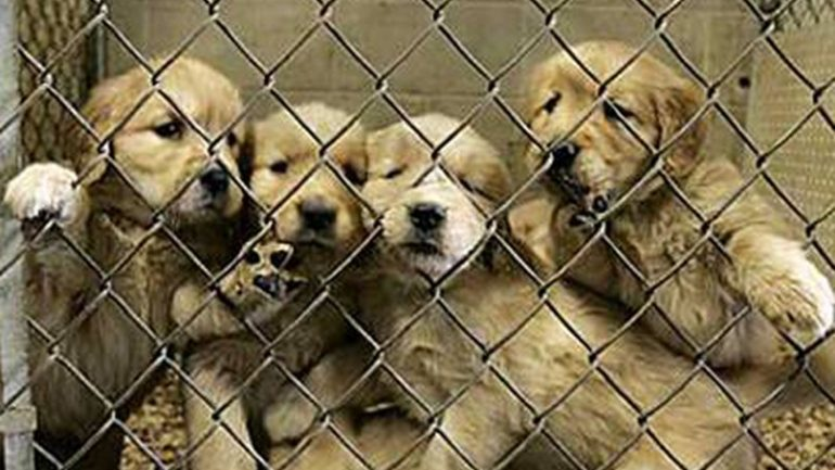Ohio Passes Law That Makes Any Form Of Animal Abuse A Felony Charge