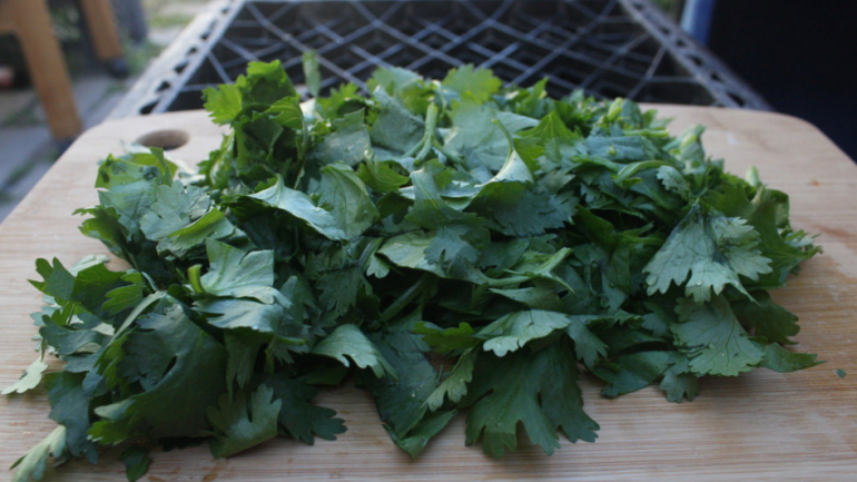 Do You Know Someone Who Hates Cilantro – Doctor Explains The Real Reason Why