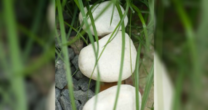 People Who Find These Strange White Stones Outside Their Homes Could Be In Serious Danger