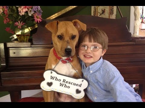 Watch What Happens When Mom Brings Home a Rescued Pitbull and She Meets Autistic Son
