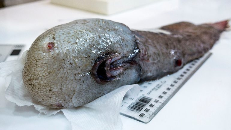 Disturbing Faceless Fish Hauled From 'The Most Unexplored Environment On Earth'