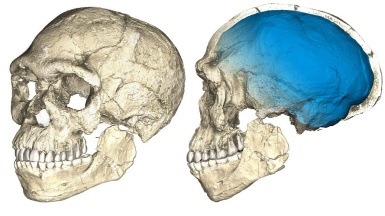 'Oldest Ever' 300,000 Year Human Fossils Unearthed In Morocco