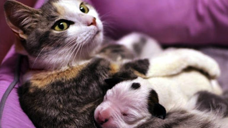 This Newborn Pitbull Puppy Was About To Die. But Then This Cat Did Something Unbelievable