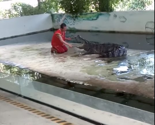And This Is Exactly Why You Don't Stick Your Head In An Crocodile's Mouth