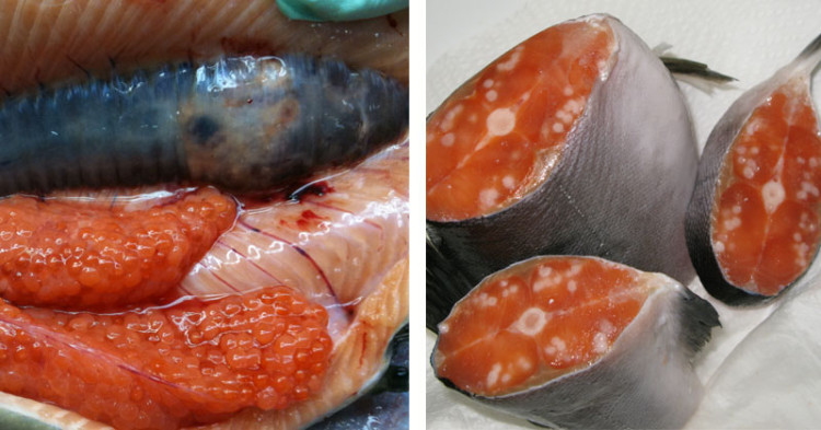 High Radiation Levels Found In North American Seafood