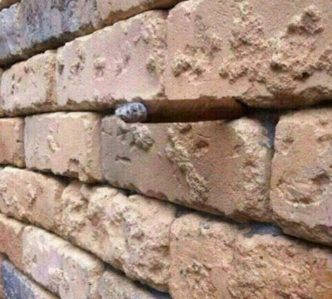 'Brick Wall' Optical Illusion Makes The Entire Internet Scratch Their Heads