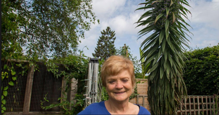 Last Year She Planted A Seed, Just 9 Months Later It's Setting Records As Tallest In Country