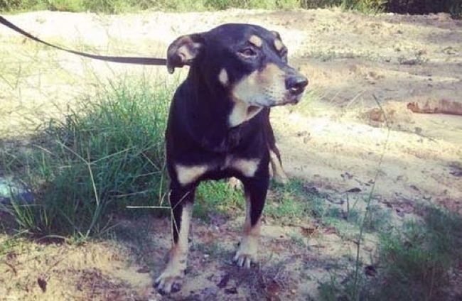 Dog That Was Put To Sleep After Being Hit By A Car Miraculously Returns From The Dead